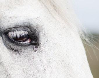 photo print, photography print, home decor, large size wall art, wall decor, horse photo print, horse photo, horse eye equestrian