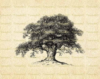 Vintage Tree Digital Image Download for Transfer Tea Towel Totes Pillows Tea Bag Tea Coaster Cushion T-Shirt.T282
