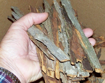 Shagbark Hickory Bark STRIPS - Great Quality - Fresh Picked - The Loose Shaggy Outer Armor Plate - 1/2 lb. - Carya ovata - Syrup Base
