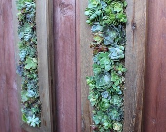 Handmade Living Wall with Succulents. Vertical Hanging Planter