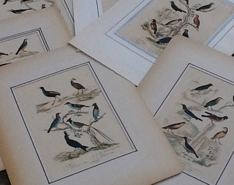 Set of 7 engravings of birds