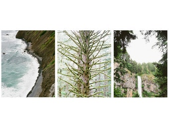 Forest and Sea Prints - Set of 3 - Oregon Prints, Gallery Wall Art, Fine Art Prints, Landscape Photography, Nature Photography