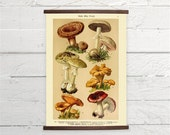 Vintage German Mushrooms Natural History Canvas Poster Print Wooden  Wall Chart Size A3 16x11