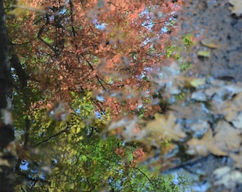 Autumn Reflection~**Fall Colors**Reflections**Puddle**Leaves**Water**Art**Decor**Office Art**