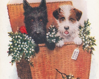 A Hamper OF Good Luck From Me To You,Fox Terrier And Scotch Terrier Share Their Warmth Postcard