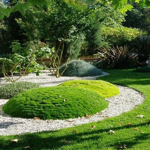 Irish Moss Ground Cover Seeds Sagina Subulata 200Seeds