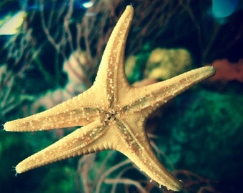 Sea Life Photography**Ocean Photography**Starfish Print**California**Aquarium Life** Nautical