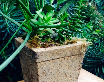 Square Hypertufa Planter.