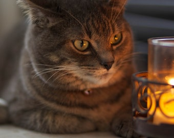 CATLIGHT Kitty, Candlelight, Furry, Cute, Adorable, Intense, Wall Decor, Home Decor, Dreamy, Glow, Soft