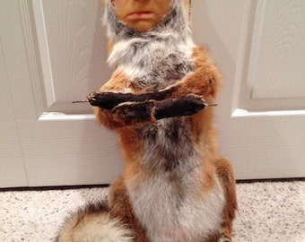 SALE SALE SALE - Vintage Taxidermy Fox Mount with Wax Face - 2