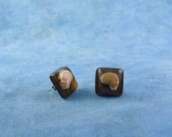Skull Encapsulated Specimen Earrings, Handmade Biology Jewelry