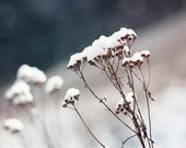 snow on herbs photography, 5x7 nature photography print, winter snow art, snow close-up,  dreamy dusty rose, white silver gray, grass photo