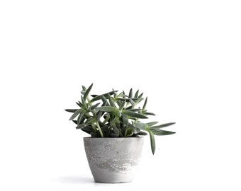 Small Concrete Planter, Urban Industrial Modern Planter, Cement Planter, Grey Planter, frae and co