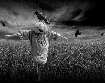 Black Crows over a Cornfield with Scarecrow No.BW0037 Black and White Fine Art Surreal Photograph