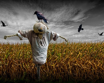 Scarecrow with Black Crows over a Cornfield and Gray Sky No.00372 A Halloween Autumn Fine Art Surreal Photograph