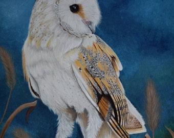 Bird Painting:  The Barn Owl - owls, tree bark, original painting, spring, wildlife, birds of prey, blue skies