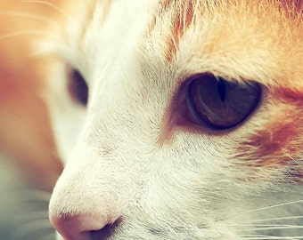 Cat photograph, Feline, Macro photography, Pet image, Close-up, nursery wall art, eyes, nose, orange, white, Christmas, gift under 40
