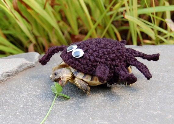 Gemutlich In Englisch : Spinne Schildkröte gemütlich  gemacht, in jeder Farbe zu bestellen