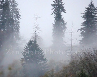Fog in the Forest Photography. Nature Photography Print. Forest Landscape Photo Print, Framed Photography, or Canvas Print. Home Decor.