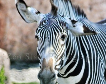 Zebra Photograph Animal Art Wall Decor Nature Photography Zebra Photo Print Childrens Art Print Animal Photo Fine Art Photography Wall Decor