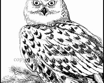 PRINT- INK DRAWING - Snowy Owl, wings, feathers, north, wildlife, bird, bird of prey, Canada, realism, 5 x 7 inch, 12.7 x 17.8 cm, wall art