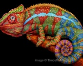 Panther Chameleon Colored Pencil Drawing. *Signed by Artist*