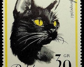 The mysterious black cat -Handmade Framed Postage Stamp Art 18462