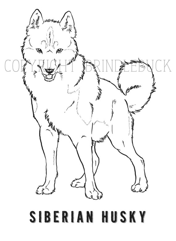 Items similar to Siberian Husky Dog Coloring Page download ...