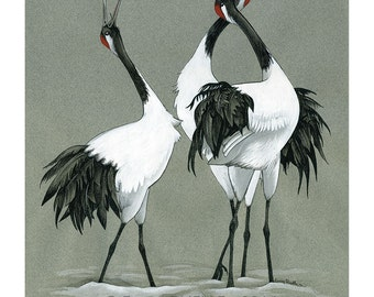 Cranes of Japan