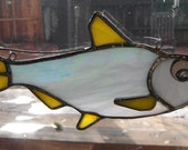 Threadfin shad - white fish suncatcher