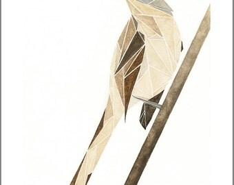 geometric mockingbird