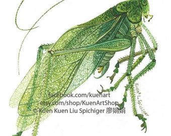 Katydid, K is for Katydid, Watercolor/Painting/Art Print, Entomology Art, Science Bug Insect Art, Green Bug, Leave Insect, Nursery Classroom
