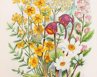 Anne Pratt Antique Botanical Print - Spiraea, Dropwort, Meadow Sweet, Avens Sp. (66)