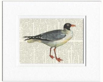 Gull Print