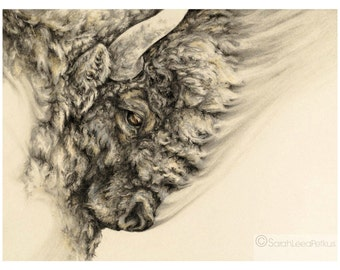 Bison - 11x14 art print - buffalo drawing