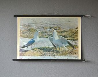 Vintage pull down sea gull seagull educational chart school chart map ocean sea zoology print