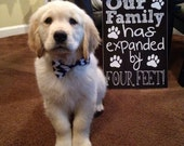 New Puppy Announcement - Our Family Has Expanded by Four Feet - Cute Funny Printable Chalkboard New Pet Announcement Digital File