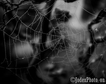 Instant Digital Download Fine Art Nature Photography 'Web in Front' Gothic Dark Moody Black and White Printable