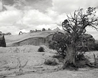 Delicate Arch - 4  Photos - Landscape Photography - Black and White Photography