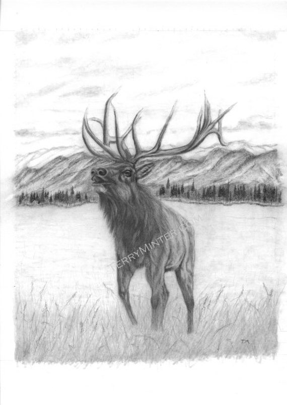Pencil drawing print Elk bull on the landscape. by ...