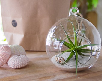 Glass Terrarium with Air plant