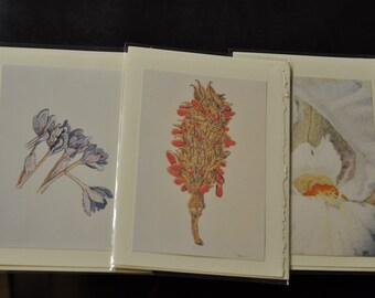 Botanical Art Set of 6 blank cards