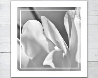 Photo print - Magnolia