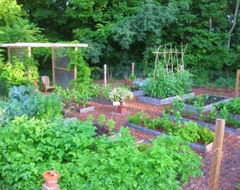 Spring Garden Seed Collection - 7 Plant-types, 600 seeds (Organic/non-GMO)