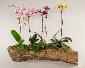 Elm Log Flower Pot II