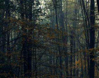 SALE-  DOWNLOAD NOW! - Landscape - Autumn Woods
