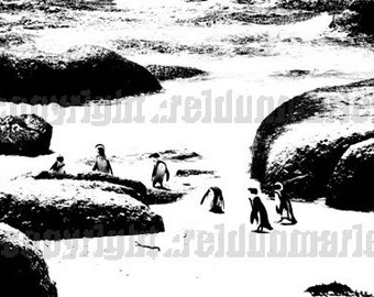 penguins photography on canvas black and white contrast beach sea water exclusive expensive nature animal wall musthave
