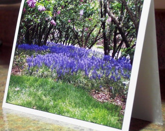 Blank Greeting Card - Grape Hyacinth