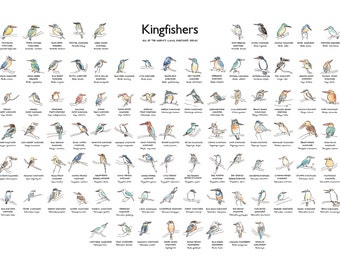 Kingfisher Illustration, Bird Species Poster, Art Print of Every Living Kingfisher Species, Giclee Print
