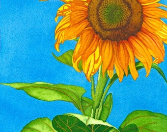 Watercolor painting...SUN DIPPED...sunflower...giclee